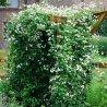 Klimplanten haag groenblijvend (4 meter): 100% privacy