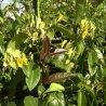 Wit/roze/geel en groenblijvende klimplanten mix 2