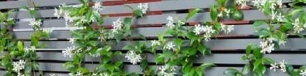 Klimplanten mestkorrels en bindmateriaal