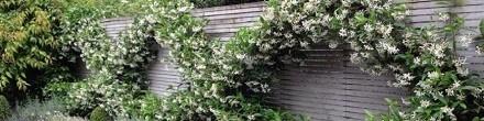 Klimplanten voor in pot op Balkon en Patio koopt u  bij ClematisOnline